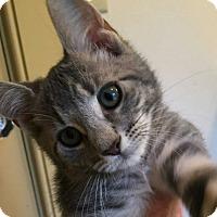 Adopt A Pet :: Elliott - loves cats, dogs - Randolph, NJ