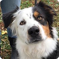 Adopt A Pet :: Ozzie - Texico, IL