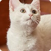 Adopt A Pet :: Spyda - Harrisonburg, VA