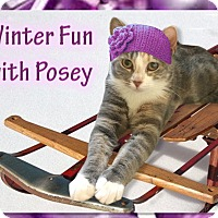 Adopt A Pet :: Posey - East Brunswick, NJ