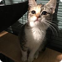 Adopt A Pet :: caroline - millville, NJ
