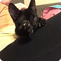 Adopt A Pet :: Elliot - Bensalem, PA