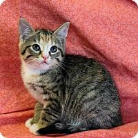 Adopt A Pet :: Tallulah - Greensboro, NC