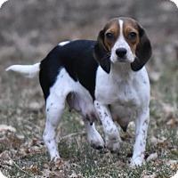 Adopt A Pet :: Bailey - Mechanicsburg, PA