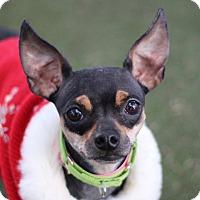Adopt A Pet :: TOOTERS - Las Vegas, NV