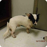 Adopt A Pet :: A572155 - Oroville, CA
