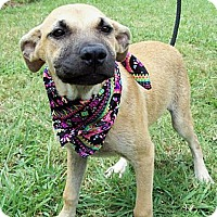 Adopt A Pet :: BUFFY/Special Summer Pricing - Glastonbury, CT