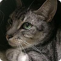 Adopt A Pet :: Binx - Winchester, CA
