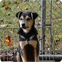 Adopt A Pet :: Nicole - New Boston, NH