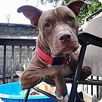 Adopt A Pet :: Dylan - Clarksburg, MD