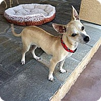Adopt A Pet :: Kingsley - Lake Elsinore, CA