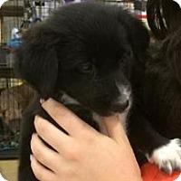 Adopt A Pet :: Gummi Bear - Gainesville, FL