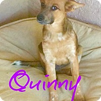 Adopt A Pet :: Quinny - Scottsdale, AZ