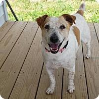 Adopt A Pet :: Jenna - Georgetown, KY