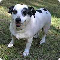 Adopt A Pet :: Lewis - Nashua, NH
