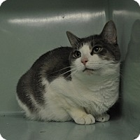 Adopt A Pet :: Georgine - Rockaway, NJ