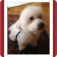Adopt A Pet :: Adopted!!Pierre - N. CA - Tulsa, OK