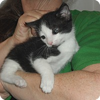 Adopt A Pet :: bam bam - Pensacola, FL