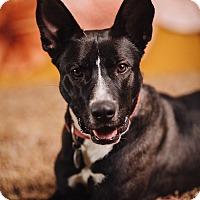 Adopt A Pet :: Dynamite - Portland, OR