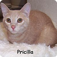 Adopt A Pet :: Pricilla - Oklahoma City, OK