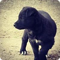 Adopt A Pet :: Fridge - Broken Arrow, OK