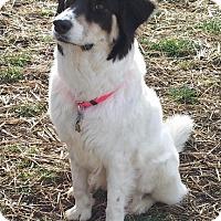 Adopt A Pet :: Liberty - Enfield, CT