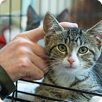 Adopt A Pet :: Hula - New York, NY
