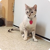 Adopt A Pet :: Lily - Woodward, OK
