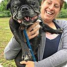 Adopt A Pet :: Emmy