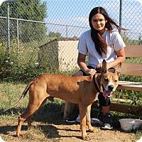 Adopt A Pet :: Bergman - Elyria, OH