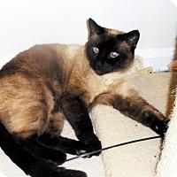 Adopt A Pet :: LEELA - Denver, CO