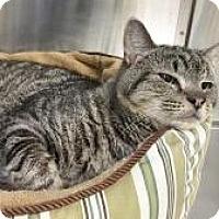 Adopt A Pet :: Buzzsaw - Salisbury, MA