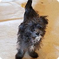 Adopt A Pet :: MEGAN - Gustine, CA