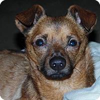 Adopt A Pet :: Franklin - Santa Maria, CA
