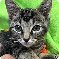 Adopt A Pet :: Bill - Columbia, IL