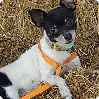 Adopt A Pet :: Quacamole - Joplin, MO