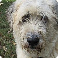 Adopt A Pet :: Blake (Pending Adoption) - Kiowa, OK