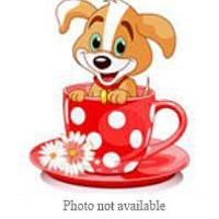 Adopt A Pet :: URGENT NOW! NEWBORN @ SBC - San Bernardino, CA
