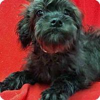 Adopt A Pet :: Cairo - Gahanna, OH