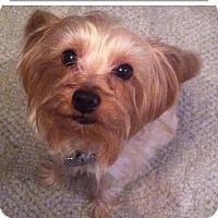 Adopt A Pet :: Ryan - Richmond, VA