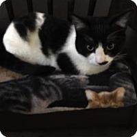 Adopt A Pet :: Romeo C1591 - Shakopee, MN