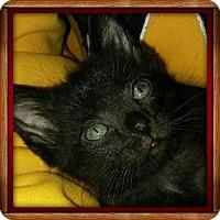 Adopt A Pet :: Salem - Gerrardstown, WV