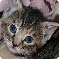 Adopt A Pet :: Krisco - Barnegat, NJ