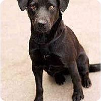 Adopt A Pet :: Liza - Portland, OR