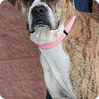 Adopt A Pet :: Asia - Palmdale, CA