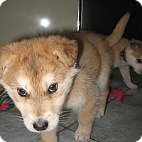 Adopt A Pet :: Levi - Egremont, AB