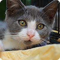 Adopt A Pet :: Steven - Brooklyn, NY