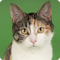 Adopt A Pet :: Sandy - Chicago, IL