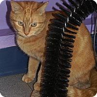 Adopt A Pet :: Doris - Englewood, FL