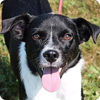 Adopt A Pet :: Paisley - Lebanon, CT